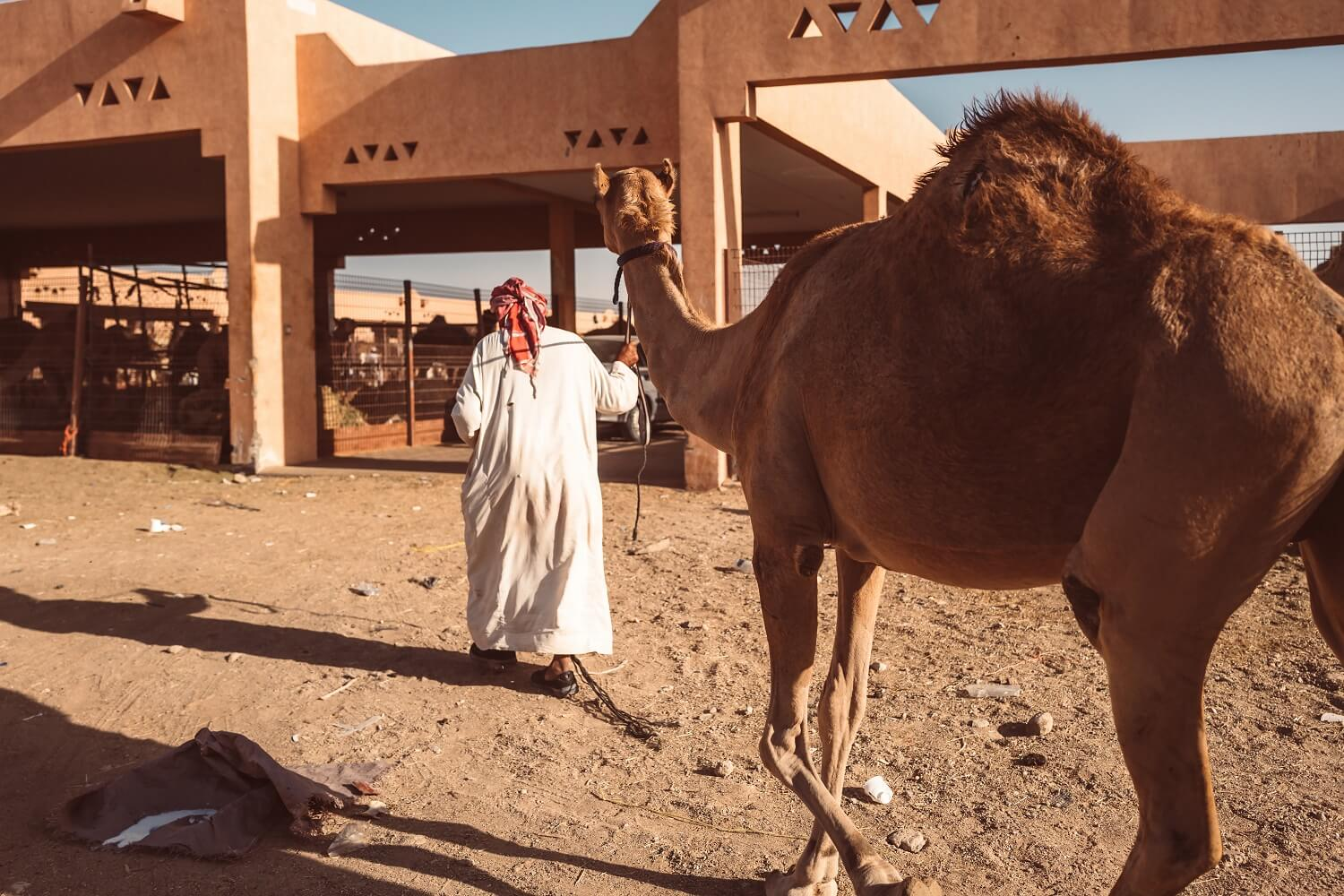"COVID-19: ""Tie Your Camel!"""